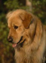 Казань: школьники заботятся  о животных в собачьем приюте