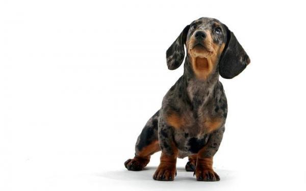 Кормление животных. Породы собак для квартиры и детей