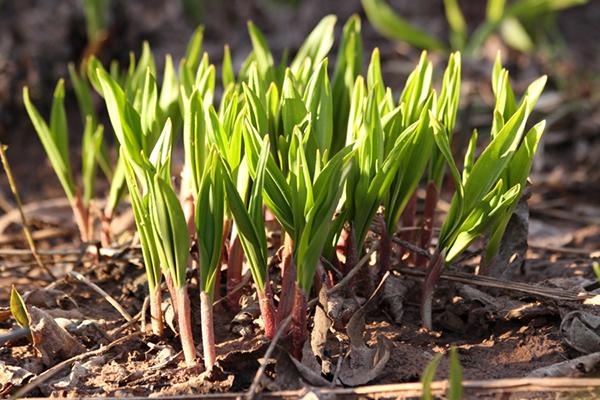 Фенология растительности и реакция на изменение климата