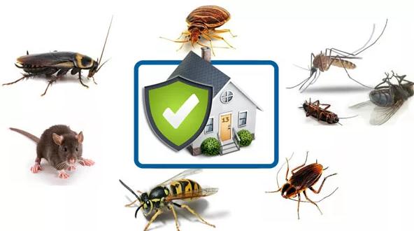Уничтожение и  выведение клопов, насекомых, грызунов