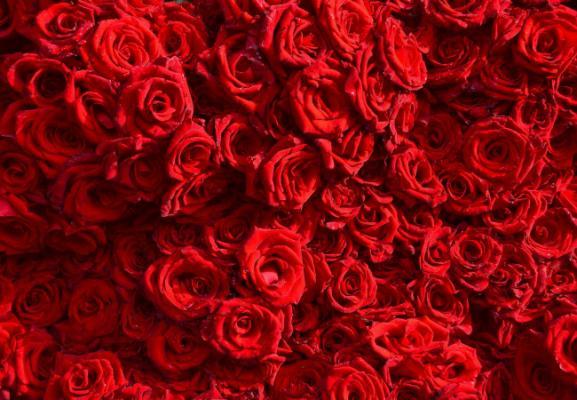 Порадуй любимого человека букетом свежих голландских роз