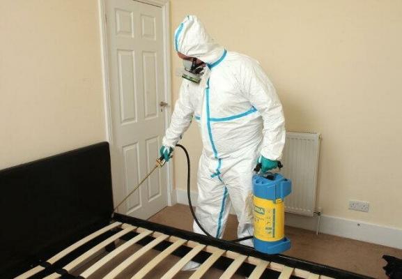 Уничтожение тараканов и грызунов в доме и проведение дезинфекции