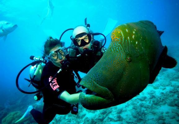 Любите дайвинг? Вас манит подводная охота?