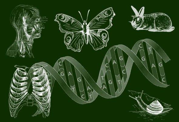 Курсы подготовки к ЕГЭ по биологии
