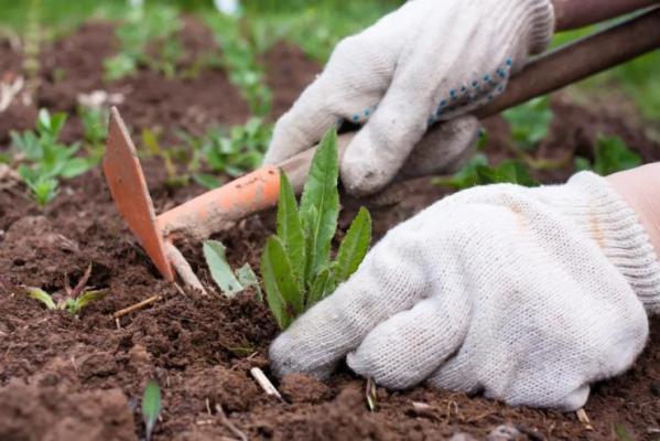 Сорняк на садовом участке и борьба с этим
