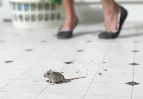 Обработка от инфекций, насекомых и по уничтожению крыс и мышей