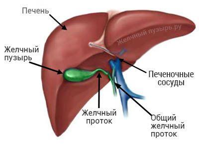 Проблемы со здоровьем. Дискинезия желчного пузыря