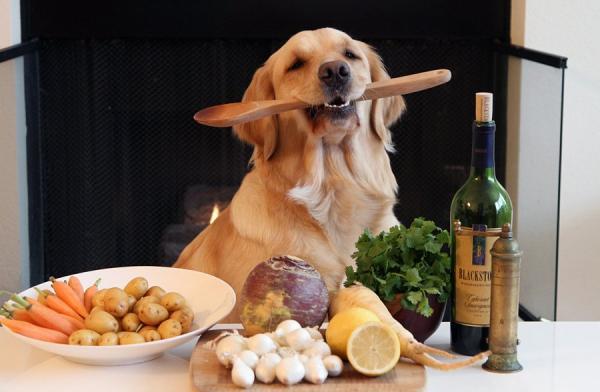 Зоотовары для собак. Кормление