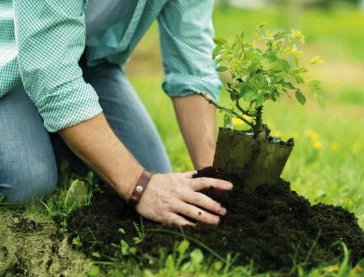 Как проходит посадка деревьев?