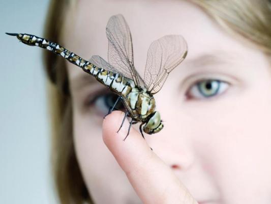 Боязнь насекомых — инсектофобия