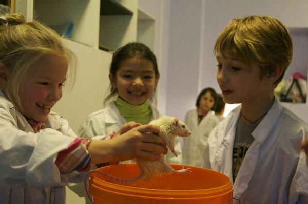 Министр образования Ольга Васильева предложила определить количество бесплатных кружков в школе