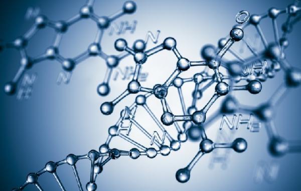 Любовь и ДНК